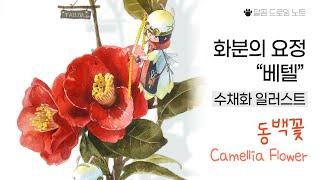 """수채화·색연필 일러스트 """"동백꽃(Camellia flo…"""