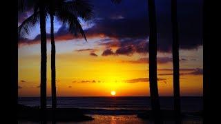 Chin Chilla - Hawaii