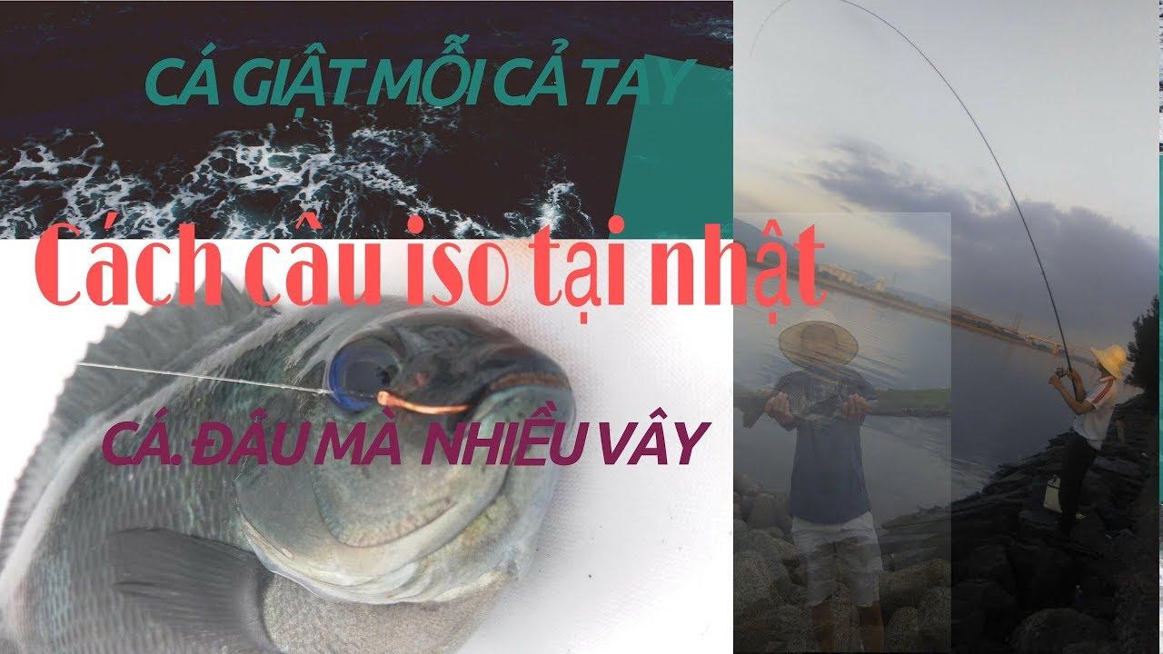 cách câu cá biển gần bờ( mồi câu mới và cái kết cá lên mỗi tay) tập 3