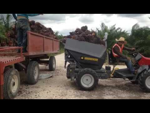 Cosecha mecanizada de Palma de Aceite en Campeche