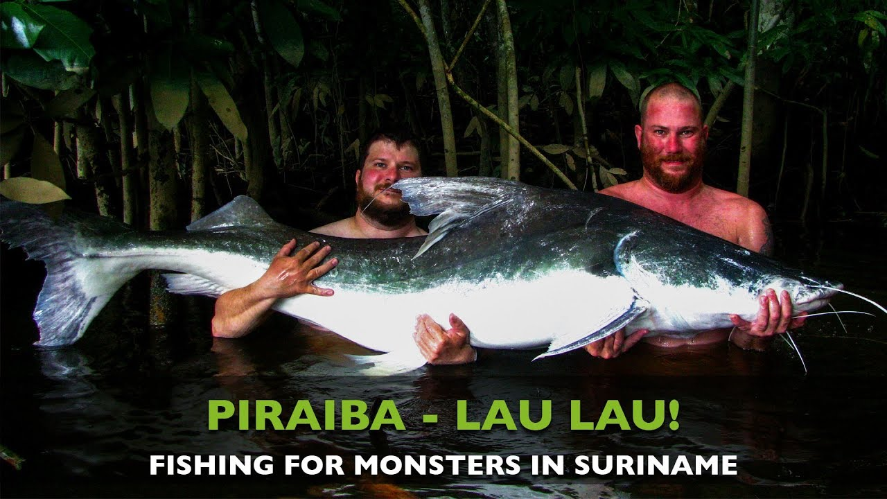 Fishing For Big Piraiba Lau Lau In Suriname Youtube