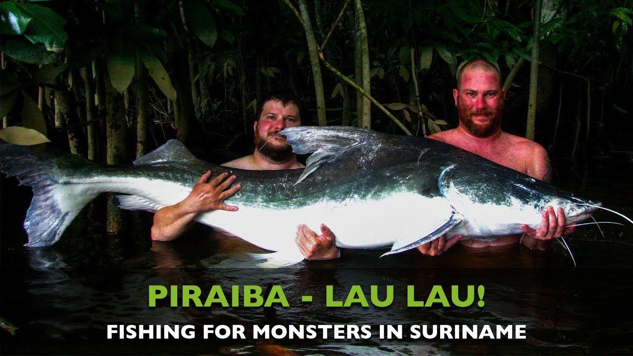 Fishing For Big Piraiba Lau Lau In Suriname Youtube