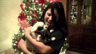 サプライズ!クリスマスにやってきた新しい家族