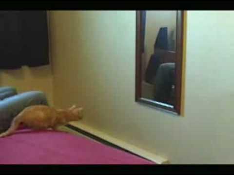 Chat qui se prend un miroir youtube for Miroir youtube