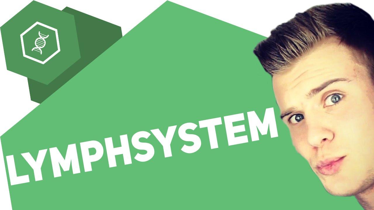 Das Lymphsystem - Organe des Menschen - YouTube