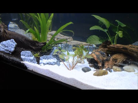 75 Gallon Planted Clear For Life Aquarium Setup Day Youtube