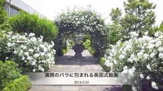 イングリッシュローズが満開!の松江イングリッシュガーデン