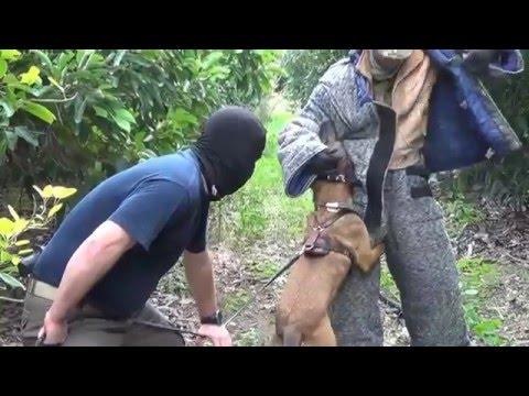 Anti-terror K9 Dog Training In Israel