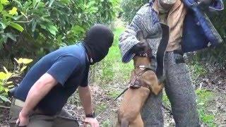 Antiterror K9 Dog Training in Israel