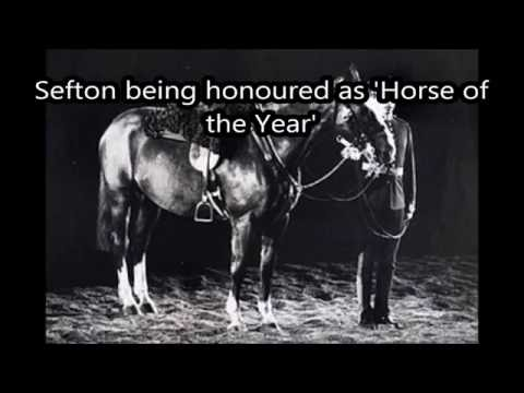 Sefton The Horse that Survived Hyde Park  Bombing