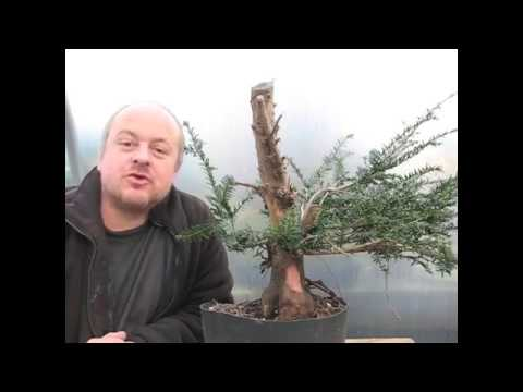 Copy Of Bonsai From A Skip Youtube