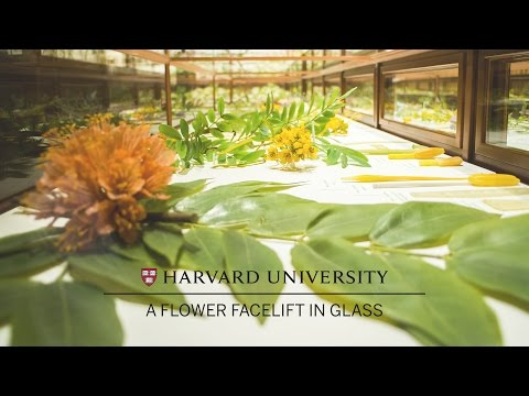 Harvard restores its famed Glass Flowers