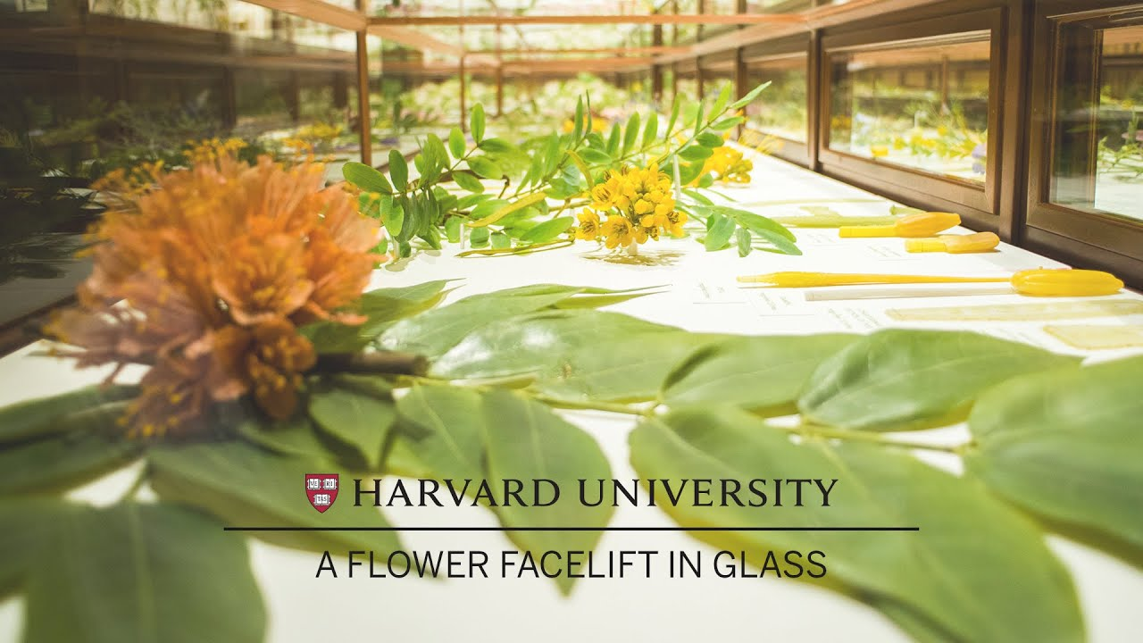 Harvard Restores Its Famed Glass Flowers Youtube