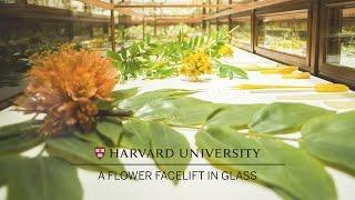 harvard restores its famed glass flowers