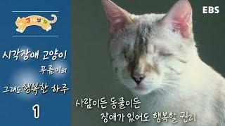 고양이를 부탁해 - 시각장애 고양이 푸름이의 그래도 행복한 하루_#001