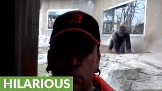 Incredible proof that even gorillas hate selfies