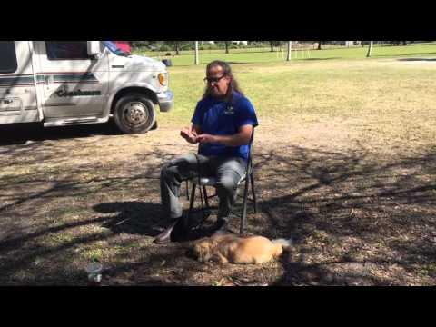 reactive-dog-advice,-dog-training-diy