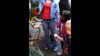 DEUBLERS KIDS 2 AT THE ZOO BIRDS.MOV