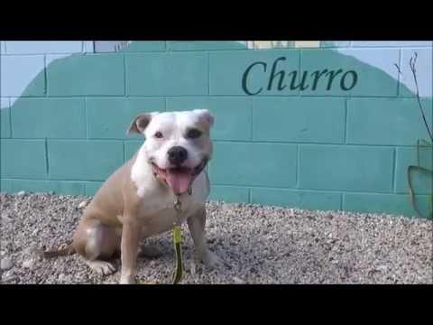 How To Make A Churro Dog