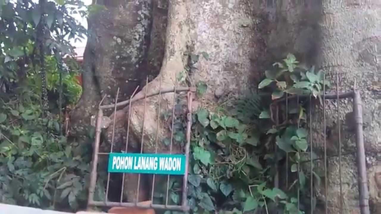 Obyek Wisata Sangeh Di Bali Sangeh Travel Bali Youtube