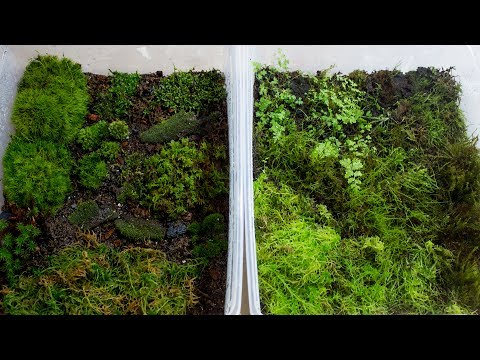 How to Propagate Your Own Moss
