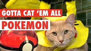 Pokemon Cats || Kittens Try To Catch 'Em All