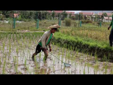 The living farm of laos
