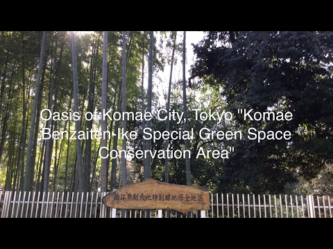 "Oasis of Komae City, Tokyo ""Komae Benzaiten-Ike Special Green Space Conservation Area"""