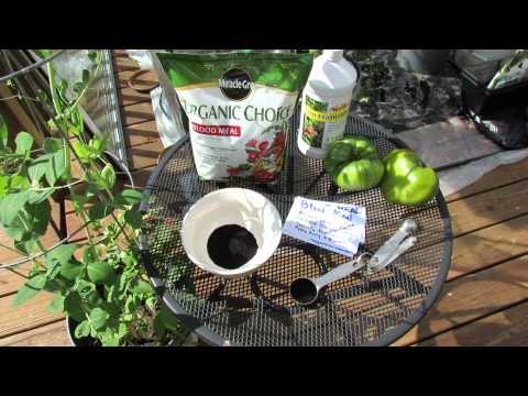 Organic Blood Meal - What is It & How do You Use it on Garden Vegetables? - The Rusted Garden 2013