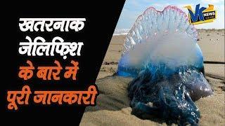 Mumbai में जिस Jellyfish ने मचाया है आतंक, उसके बारे में ये बातें जान लीजिए|