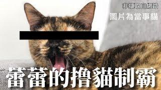 【6tan】撸貓制霸!挑戰者蕾蕾得幾分!?
