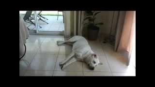 FAQ : dresser son chien et tout sur Chuck Nonoss