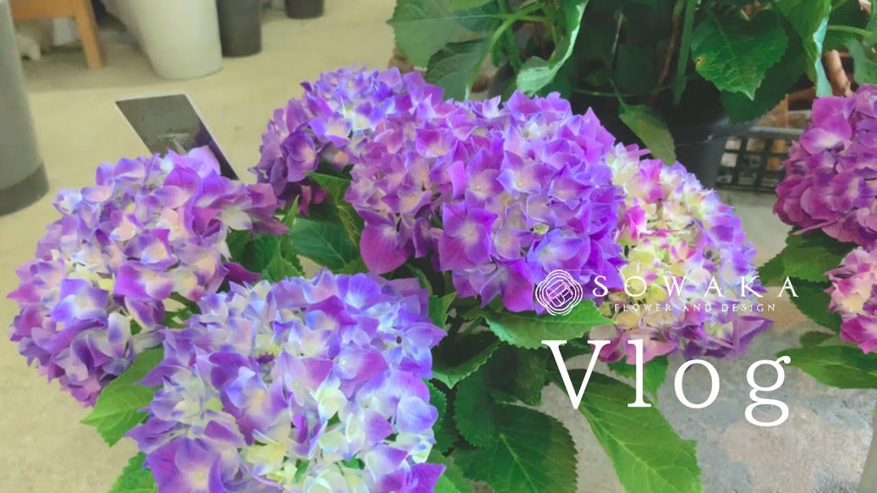 色とりどり紫陽花ツアー