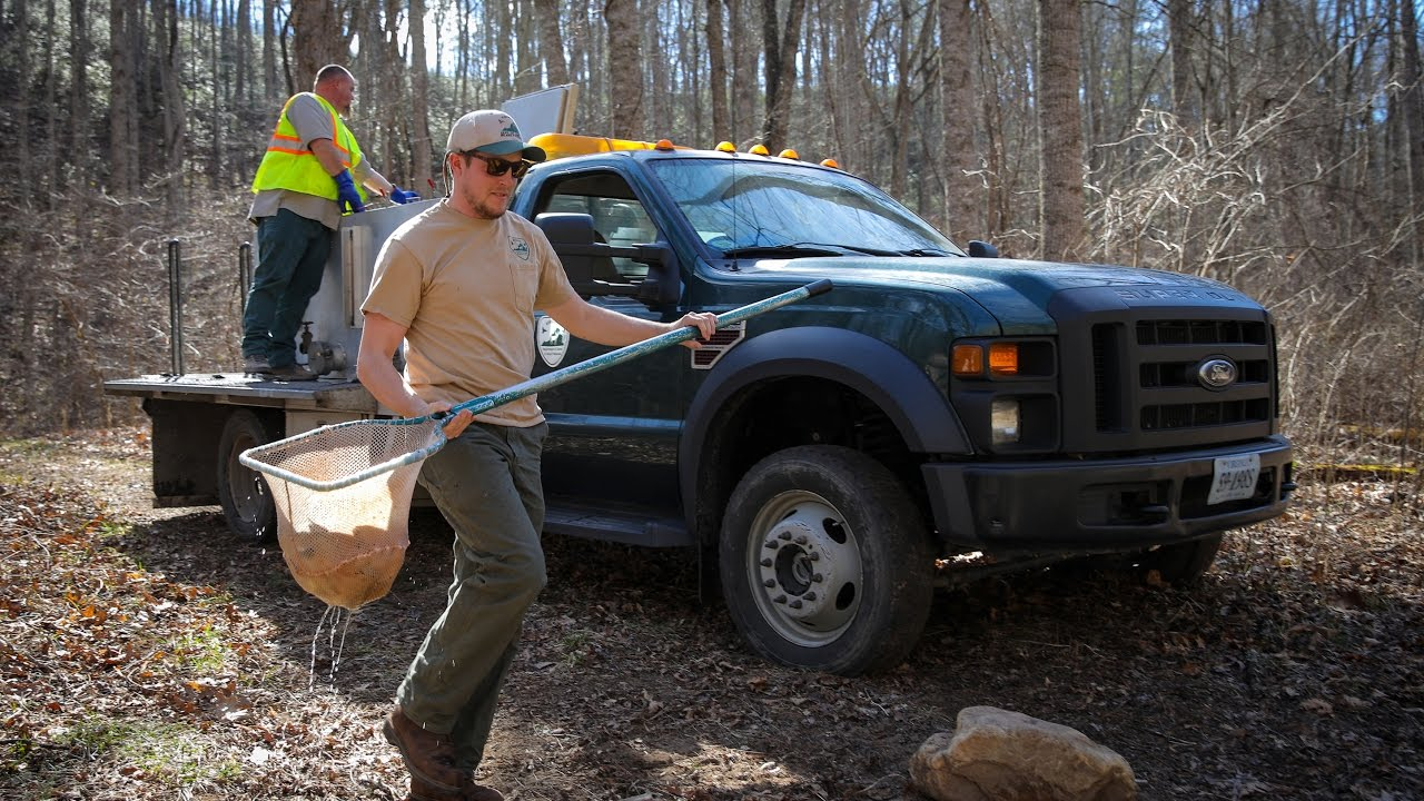 Stocking dates announced for selected virginia trout for Wv fish stocking