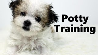 How To Potty Train A Havamalt Puppy - Havamalt House Training Tips - Housebreaking Havamalt Puppies