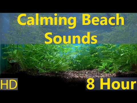 Somewhere Aquarium 8 hour Calming Beach Sounds HD 1080p