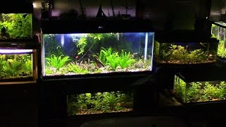 FishRoom: Aquatic Update
