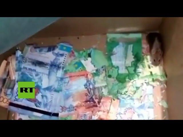 """""""Toda una mafia"""": 'Cazan' a dos ratones devorando billetes en un banco"""