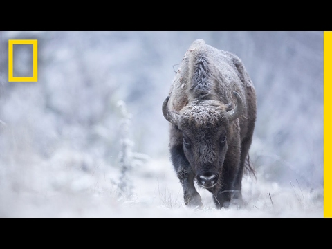 Video: Searching for the Perfect Shot with Wildlife Photographer Michel d'Oultremont