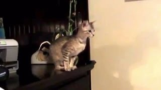 Кошки смешно прыгают. Подборка Топ 7(http://www.mirkorma.ru - Лучшие товары для животных по лучшим ценам. Скидка 7% для подписчиков по промокоду 222333 Смешны..., 2014-03-04T09:02:21.000Z)