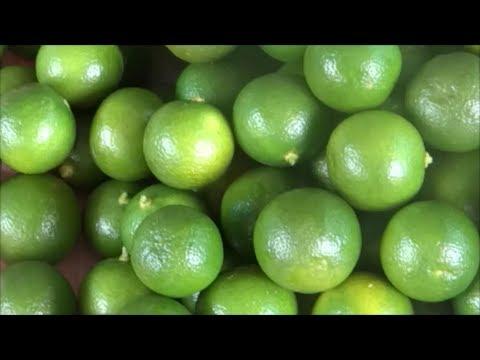 Calamondin Calamansi Fruit Harvesting And Juice Making