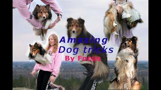120 Amazing dog tricks by shetland sheepdog Focus