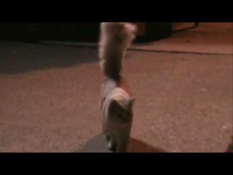 Bushy Tailed Cat