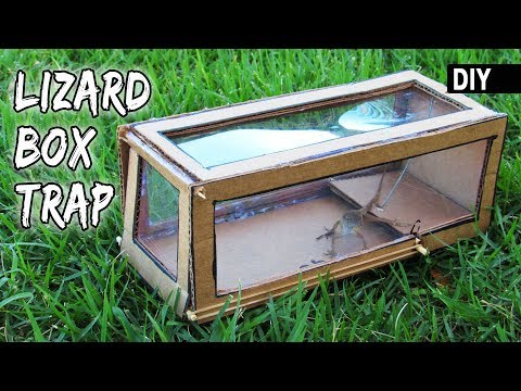 How to make a cardboard LIZARD TRAP | DIY Box Trapping device