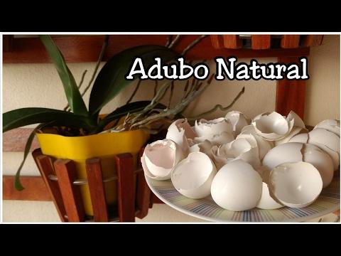 ADUBO NATURAL PARA ORQUIDEAS