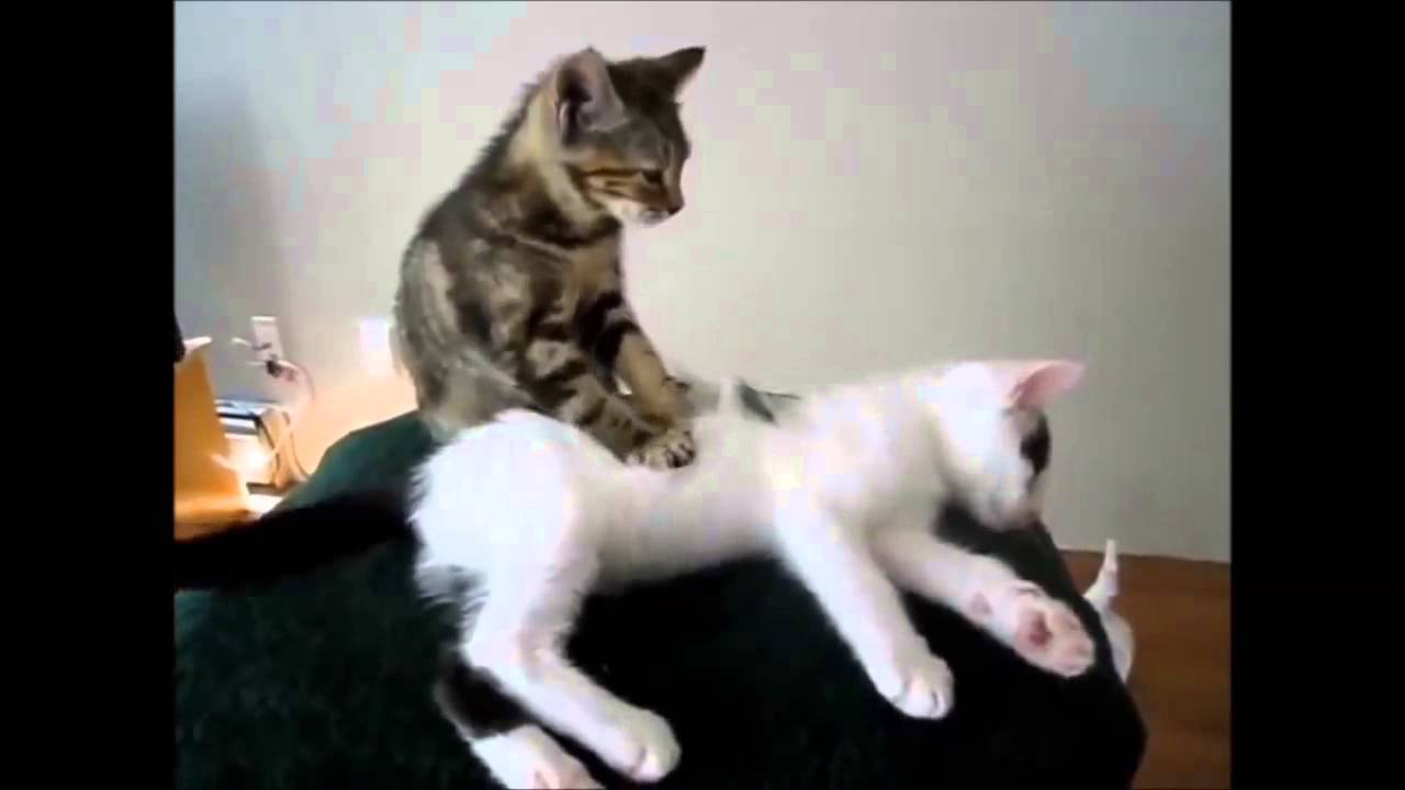 Youtube Cat Giving Dog Massage
