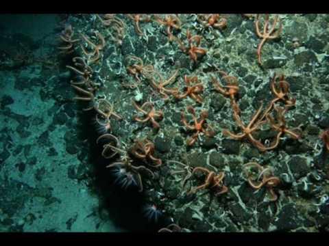 Odyssey - Submerge
