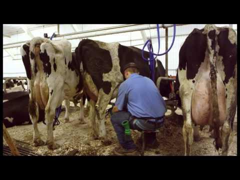 Brunton Dairy: Aliquippa, PA
