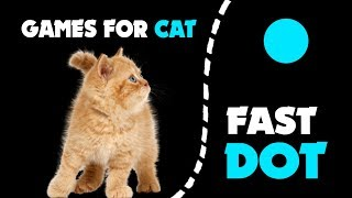 CAT GAMES ★ FAST DOT HUNT on screen
