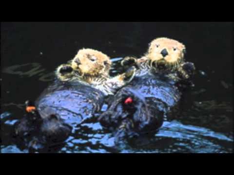 Joseph, Elijah, Miles Oil Spills Biology
